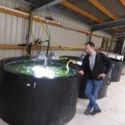 Biogasanlage Wallerstädten: Stefan Seböck und die Algenzucht